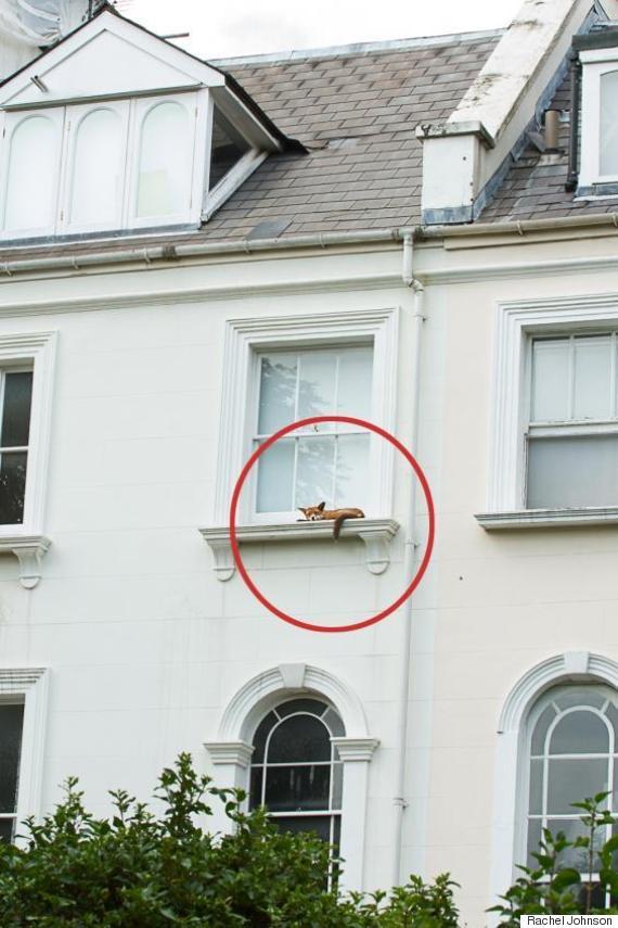 fox notting hill london