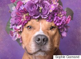 Why I Care About Pit Bulls