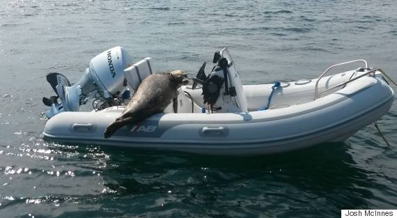 seal on boat