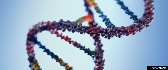 PROSTATE CANCER GENES