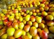 Pakistani Mangoes Hit American Shelves