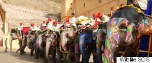 ELEPHANTS INDIA