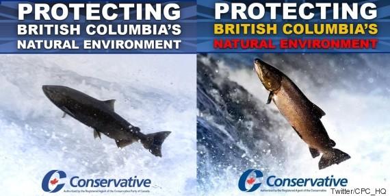 conservative salmon ad bc