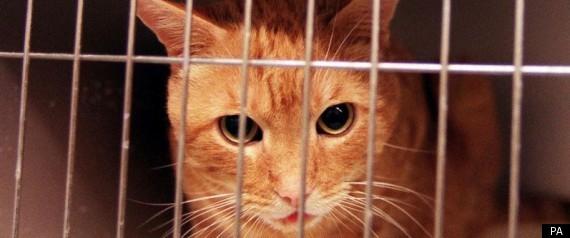 Φυλακίστηκε επειδή έβαλε την γάτα του στο φούρνο μικροκυμάτων...