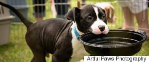 ARTFUL PAWS PHOTOGRAPHY