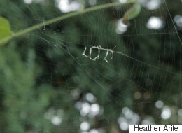 A Spider Has Written 'LOL' In Its Web