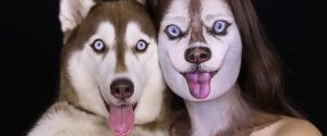 HUSKY DOG FACE PAINT