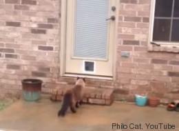 Una hora y media instalando la puerta del gato, desperdiciada
