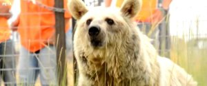 BEARS FREED FROM CAGES