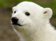 Scientists Solve Tragic Mystery Behind The Death Of Knut The Polar Bear
