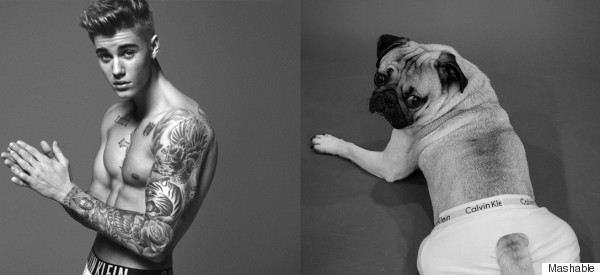 Doug The Pug Adorably Recreates Justin Bieber's Photoshoots