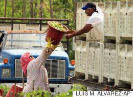 Líder agrícola asegura que hay cero tolerancia contra la discriminación y el abuso