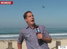 News Reporter Has On-Air Meltdown Over Huge Flying Bug