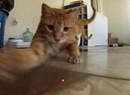 Cats vs. Lasers