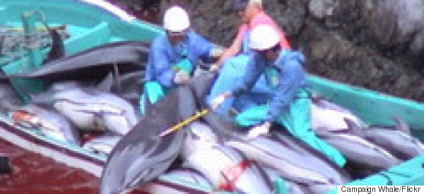 'The Cove' Activist Is Arrested As Annual Dolphin Massacre Begins In Japan