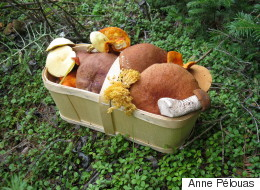 Sorties d'automne: à la « chasse » aux champignons sauvages (PHOTOS)
