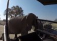 Enraged Elephant Spears Tourist Safari Truck With Its Tusks