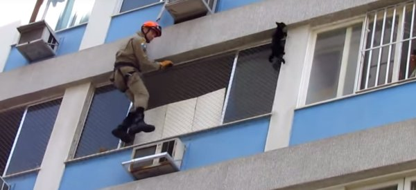 Watch The Nail-Biting Moment Firefighters Rescue A Cat Stranded Six Floors High