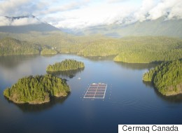 First Nation Blockades Tofino-Area Salmon Farm