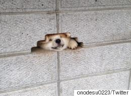 This Dog Looks Really Happy About Getting Its Head Stuck In A Wall