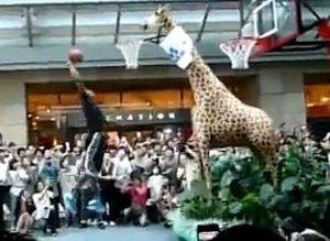 Dwight Howard Giraffe