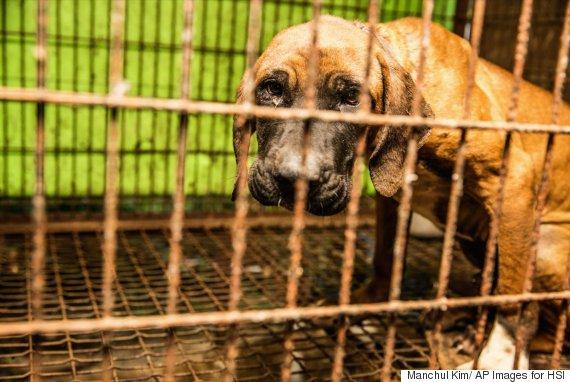 sk dog rescue