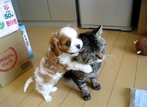 Puppy Loves Kitten