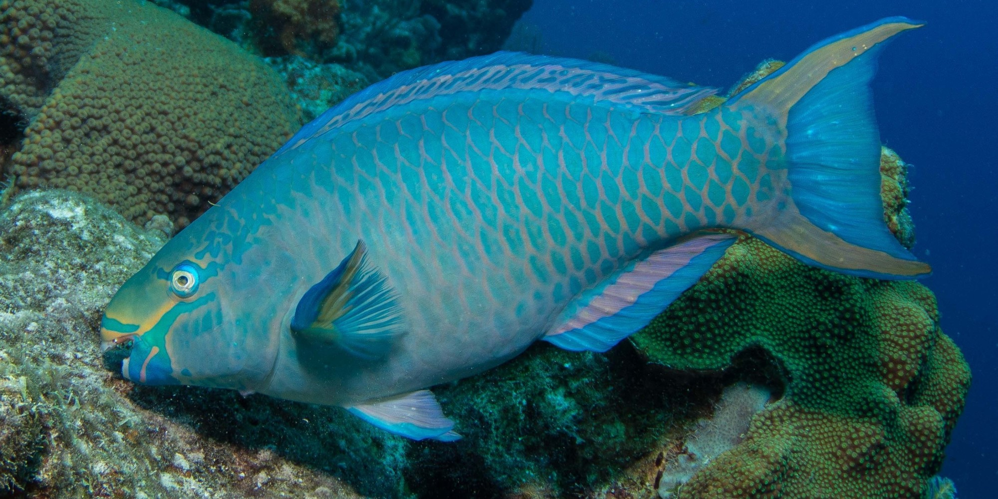 Blueprint for Oceans in Parrotfish Paradise | HuffPost