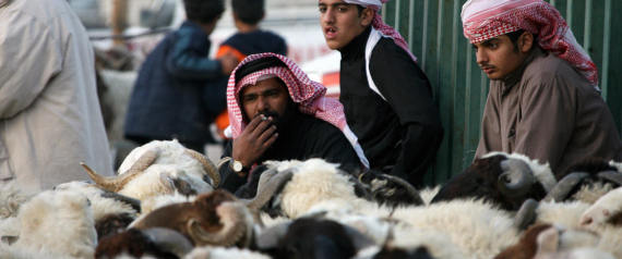 SHEEP IN KUWAIT