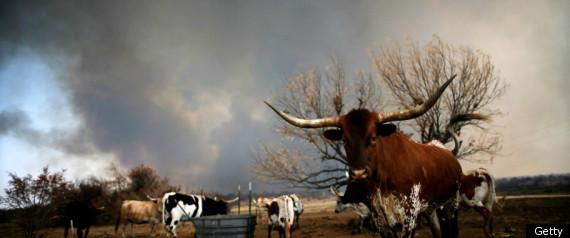 Texas Wildfires 2011
