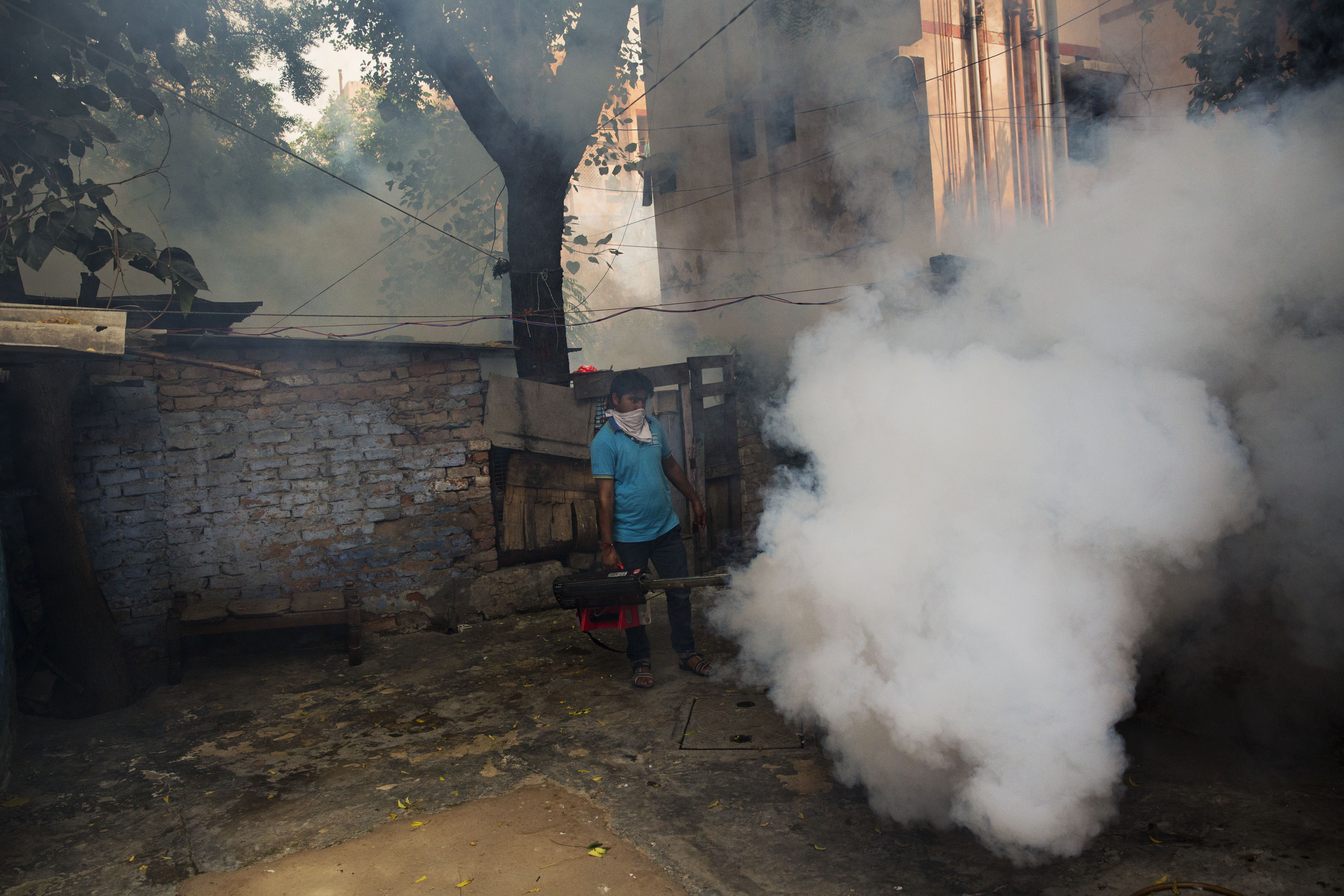 dengue delhi