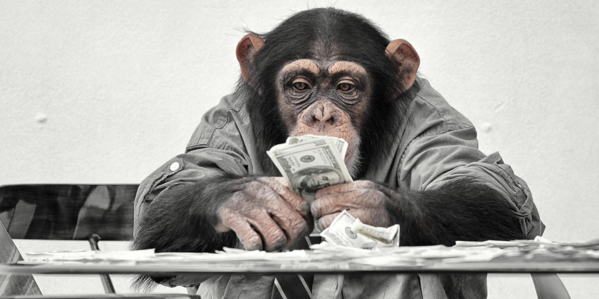 Money Monkeys