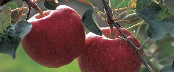 Résultats de recherche d'images pour «saison récolte»