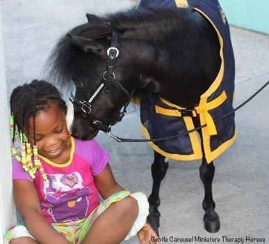 mini chevaux