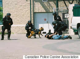 Edmonton's Maverick Wins Canadian Police Dog Competition
