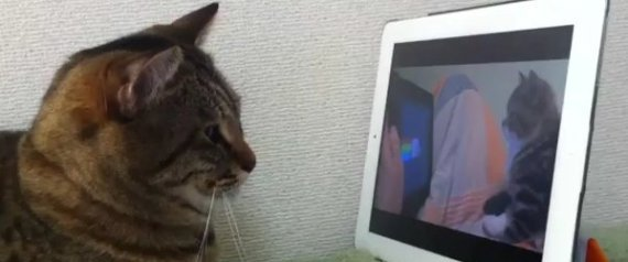 CAT WATCHING CAT WATCHING NYAN CAT