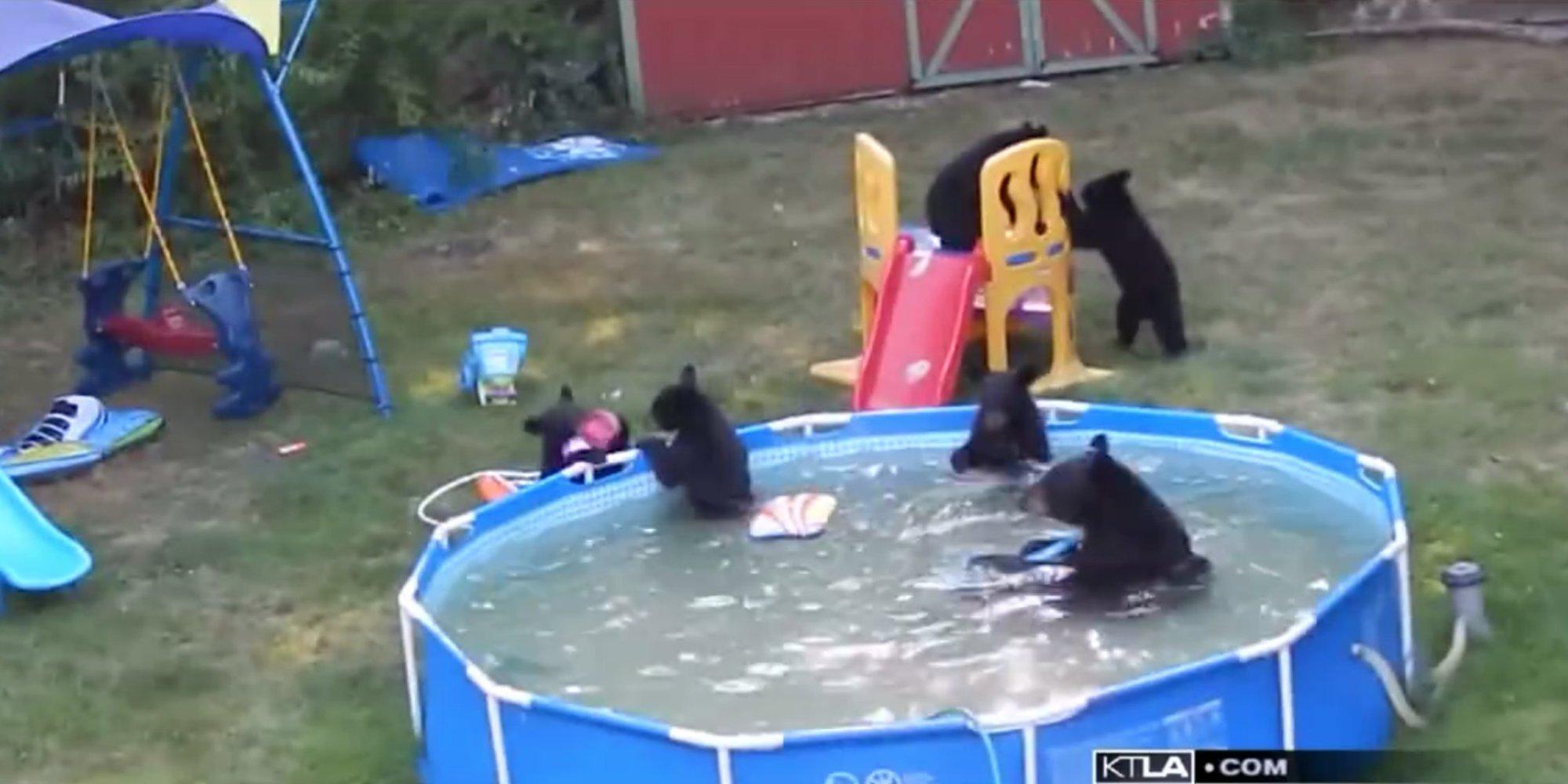 Family of bear cubs break into family 39 s paddling pool for for Family paddling pool