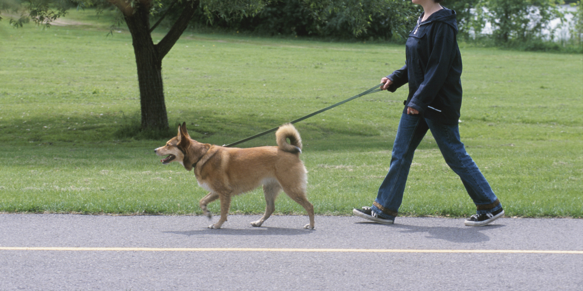 Dogs And Humans With Leash