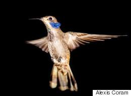 Vibrant Hummingbirds of Costa Rica