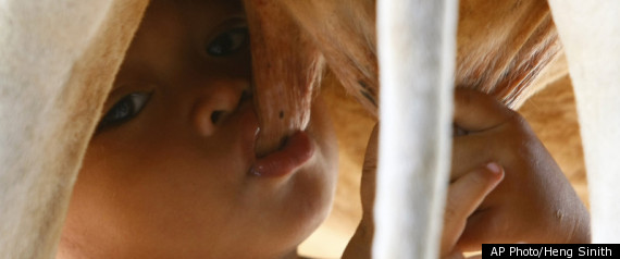 Cambodian Boy Suckles From Cow After Parents Leave