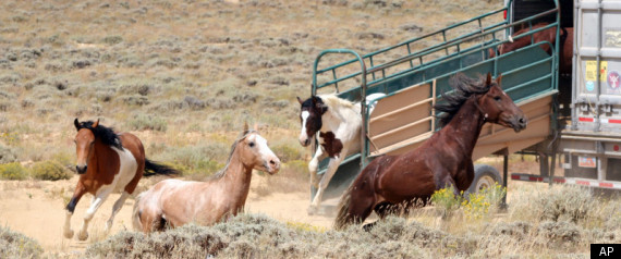 Wild Horse Policy Scrutinized In Wyoming