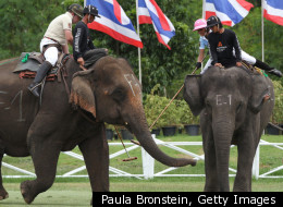 PHOTOS: The Sport Of KIngs -- Elephant Polo -- Grows In Thailand