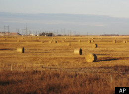 NDP Targets Seven Tory MPs For Potential Wheat Board Conflict