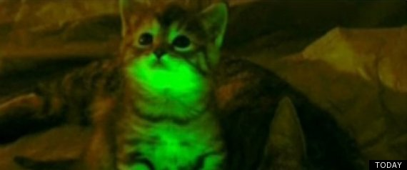 GLOW IN THE DARK CATS AIDS