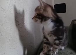Gatos se enfrascan en épicas batallas con sus propias sombras