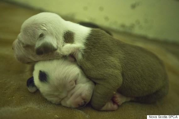 dogs seized nova scotia