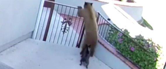 BEARS DOG