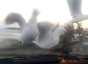 How To Troll Seagulls