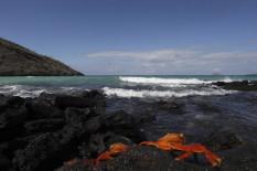 Floreana ist die südlichste Insel im Galapagos-Archipel
