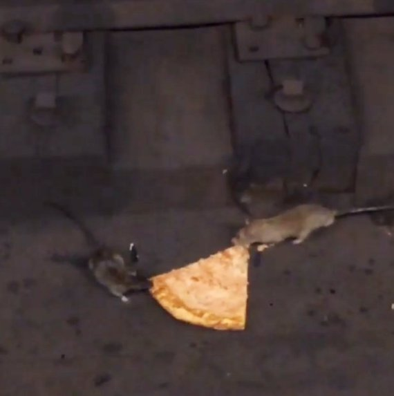pizza rat battle